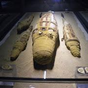 mumie krokodyli Kom Ombo.jpg