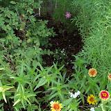 Gardening 2010, Part Two - 101_3275.JPG