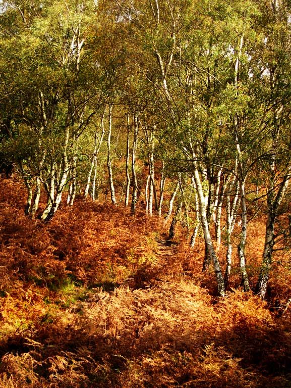 Gallery-Cannock-Chase