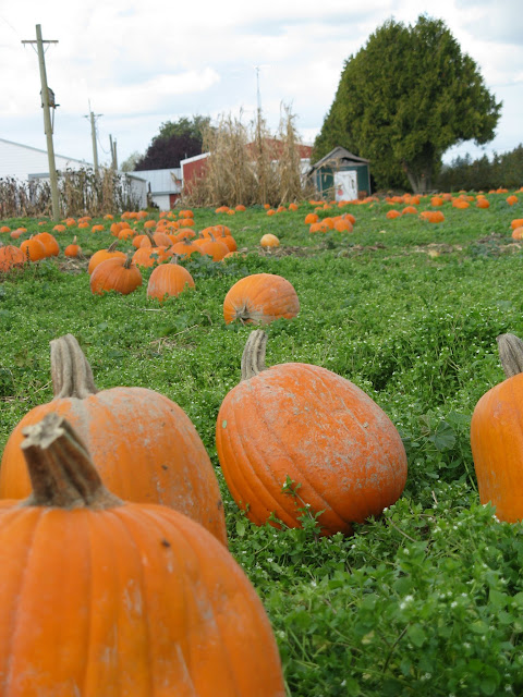 Bellewood Acres pumpkins / Credit: Jonathan Lytle