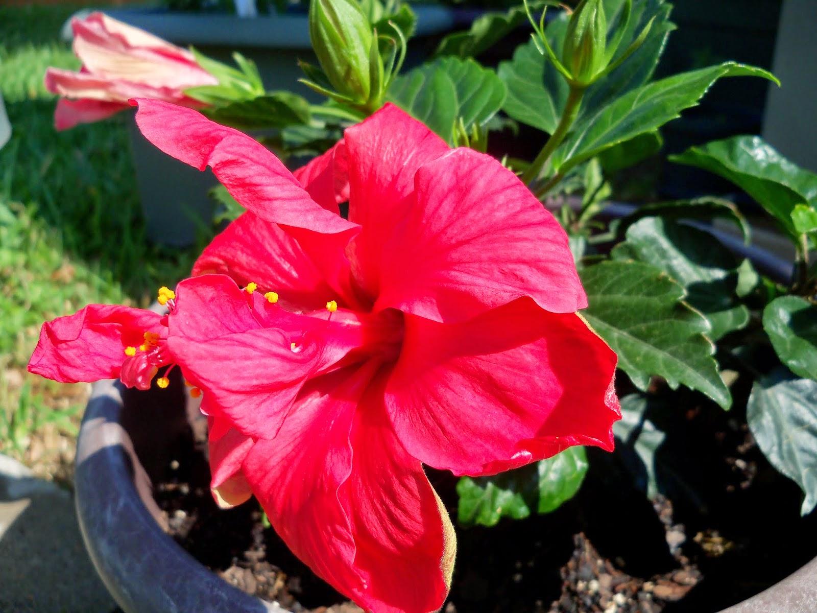 Gardening 2014 - 116_1541.JPG