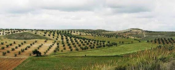Más de un millón de euros en ayudas para la agricultura y la ganadería