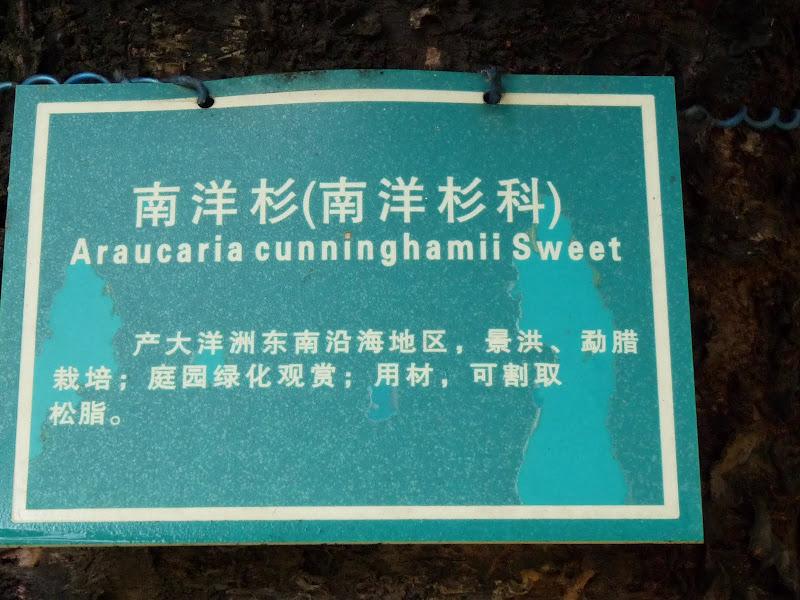 Chine .Yunnan . Lac au sud de Kunming ,Jinghong xishangbanna,+ grand jardin botanique, de Chine +j - Picture1%2B703.jpg