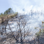 Incendi Controlat Onil-13.jpg