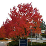 2012_10_12_Fall_Colors