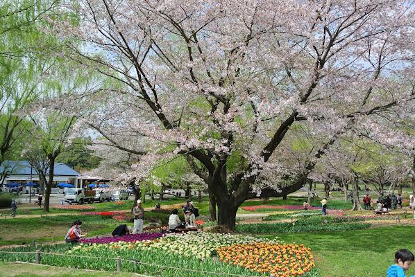 Kokuei Showa Memorial Park