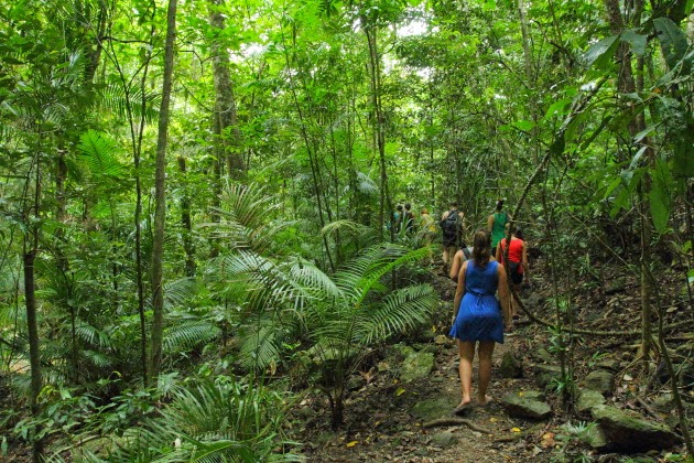 Trekking in the rainforests of Queensland