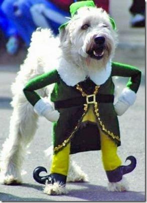 disfraces divertidos para perros  (26)