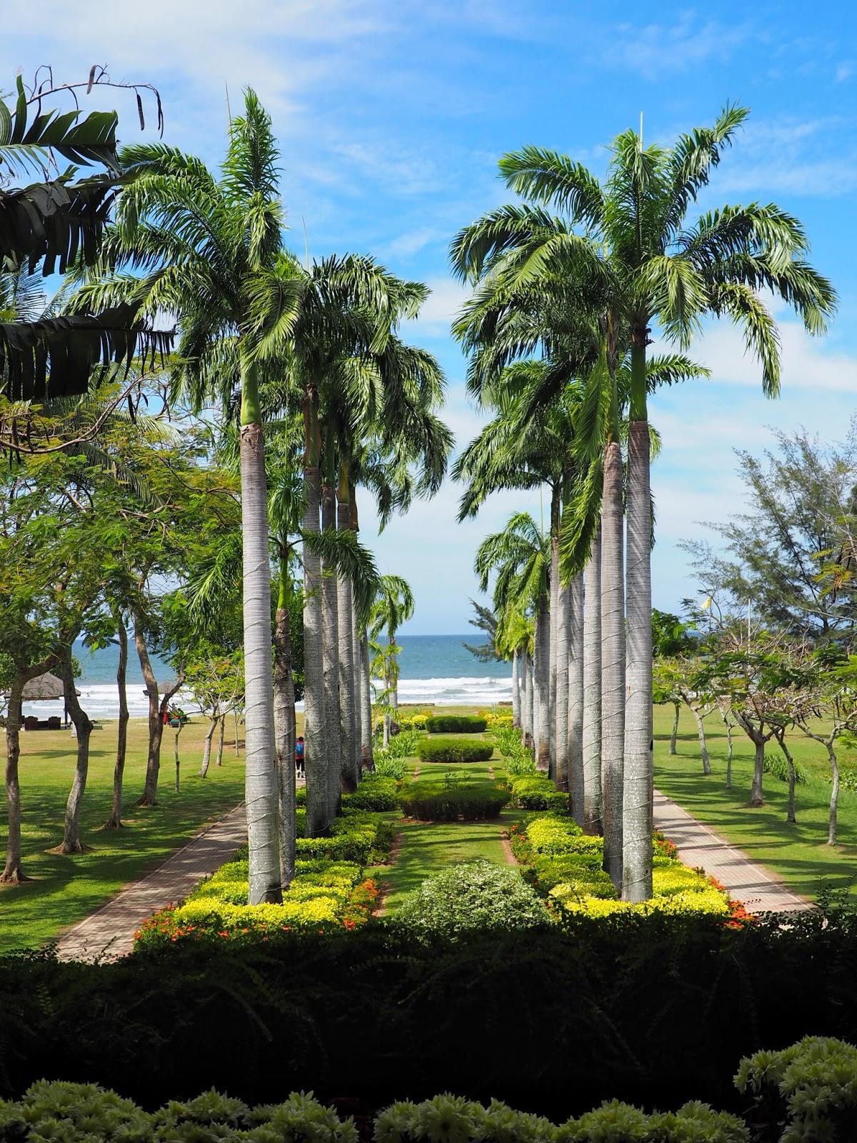 sabah kota kinabalu beach palm trees malaysia