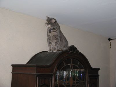 I can touch the ceiling with my ear!