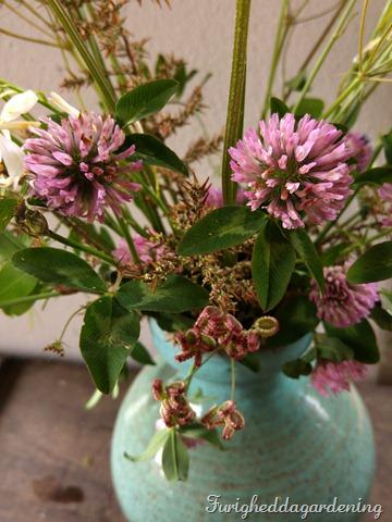 Trifolium detail