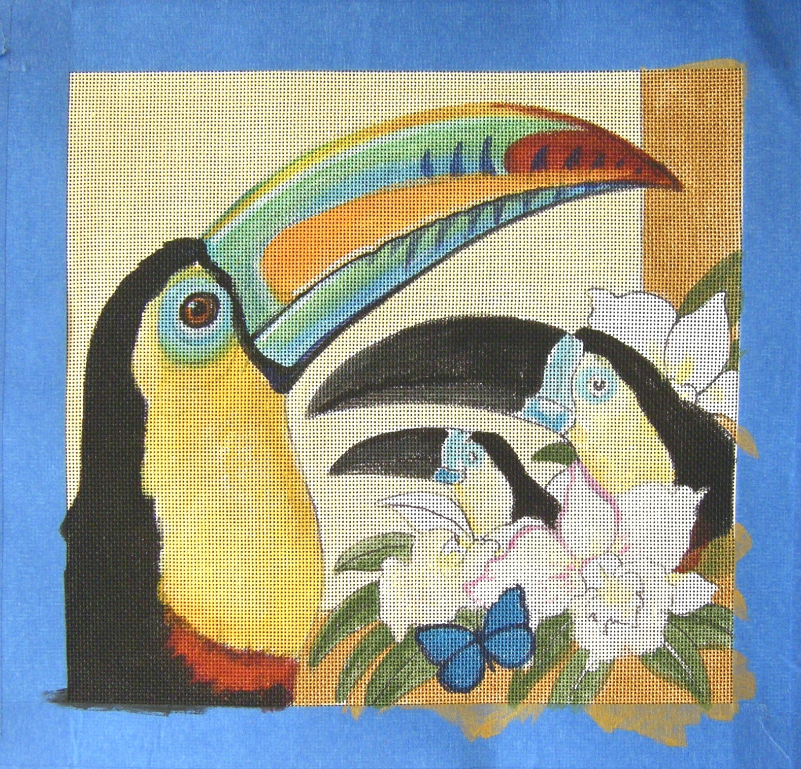 a toucans life cycle