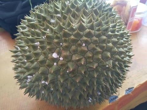 Buah durian lagi sedap