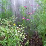 Gardening 2010, Part Two - 101_2566.JPG