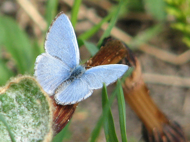 Spring Azure - male