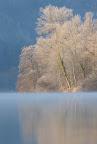 APPARITION   Du soleil vers 11h, dans la Vallée de la Bienne, novembre 2016