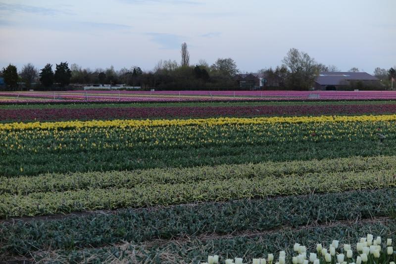 Weekend Noord Holland 2016 - IMG_6487_800x534.JPG