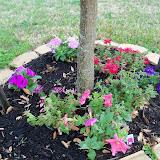 Gardening 2011 - 100_6736.JPG