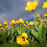 Flower 006_1280px.jpg