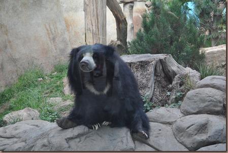 08-17-16 Boise Zoo 32