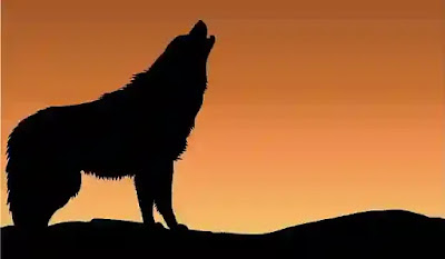 رؤية الذئب في المنام للامام الصادق