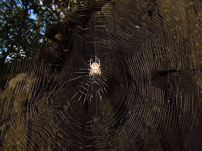 Photo: Spider in the quarries