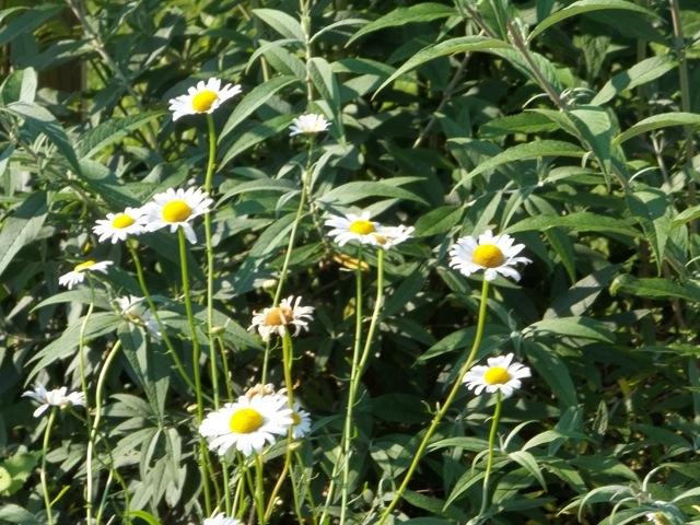 Melissa Jones Schoolyard Habitat Garden - Image%2B6.jpg