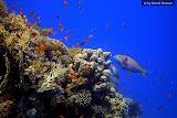 Reef panorama (© 2008 Bernd Neeser)