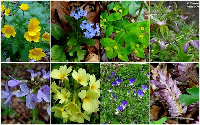 flori-aprilie-baiului-rw.jpg