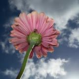 Gardening 2011 - 100_9978.JPG