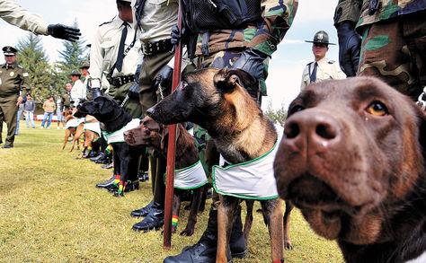 En 15 años, 282 canes antidrogas egresados hallan 14 t de cocaína - Bolivia informa