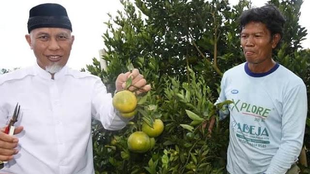 Foto: Buya Mahyeldi Panen Jeruk di Nagari Andiang Kab. 50 Kota. Padang Kembali Ditunjuk Sebagai Tuan Rumah Penas Tani 2021.