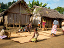 In another part of the village, the women were drying their rice in the sun.