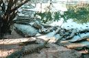 Krokodil Farm, bei Pattaya, 2001