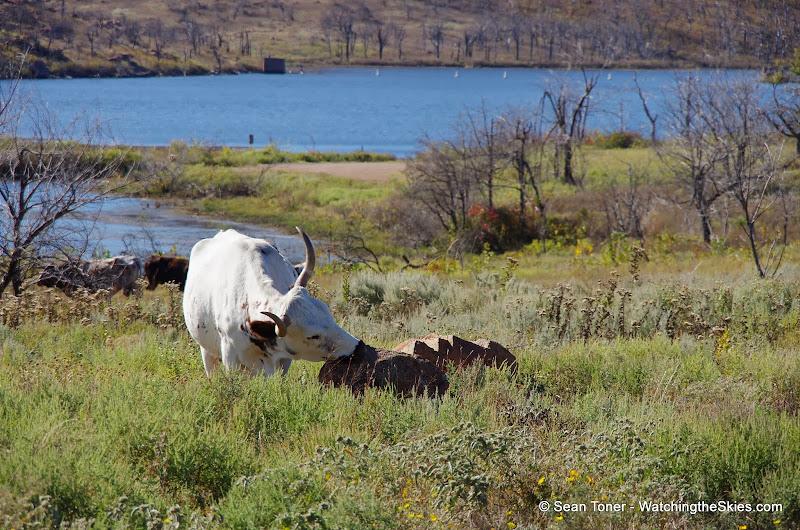11-09-13 Wichita Mountains Wildlife Refuge - IMGP0406.JPG