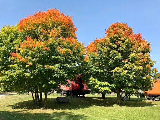 First fall color near the cabooses, September 11th, 2017