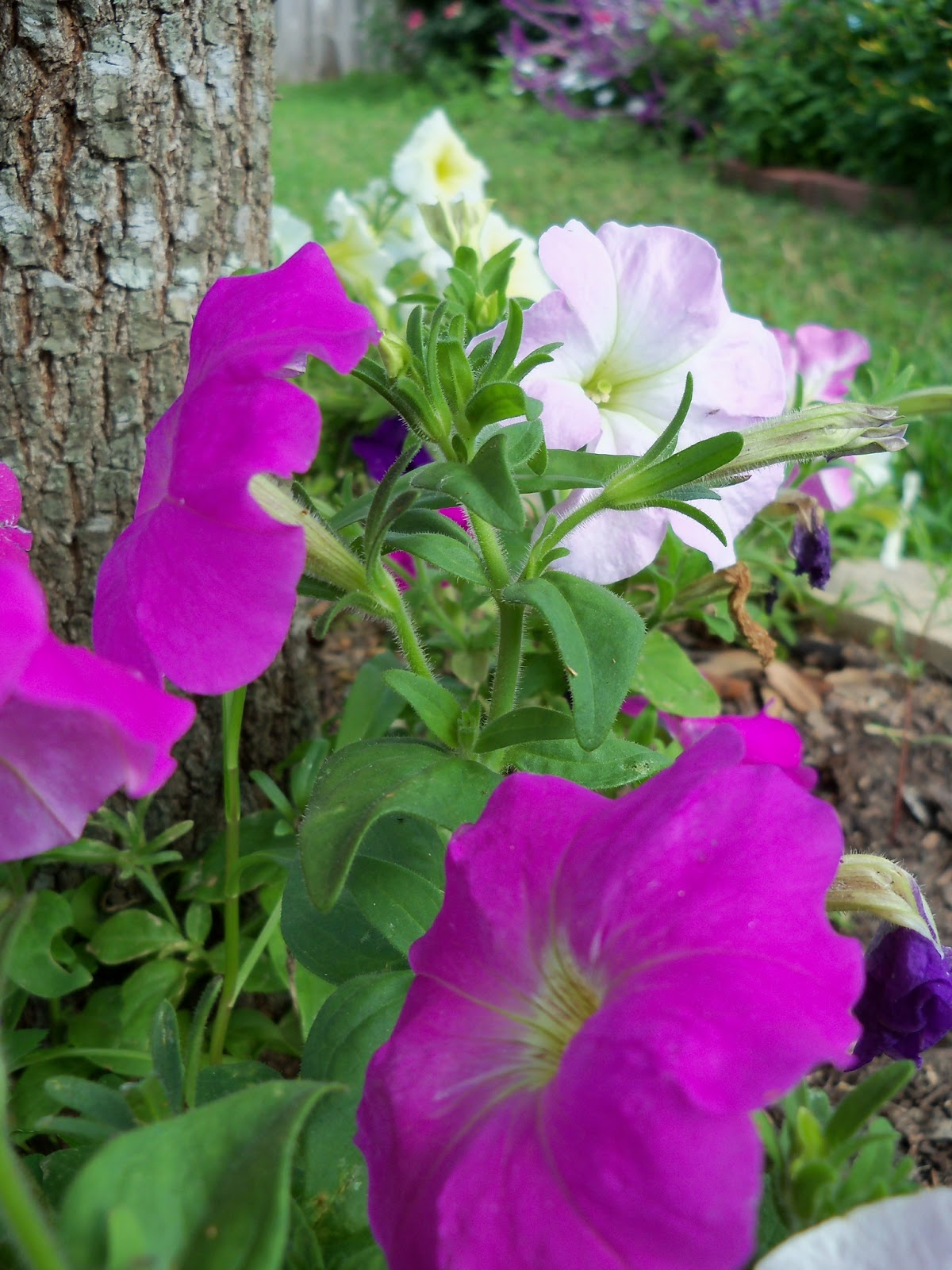 Gardening 2012 - 115_1626.JPG