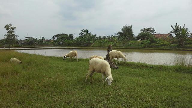 Sejarah tanggul sungai ciasem subang