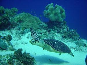 トゥバタハ岩礁海洋公園