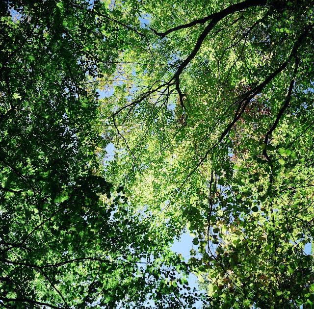 北岳 樹林帯