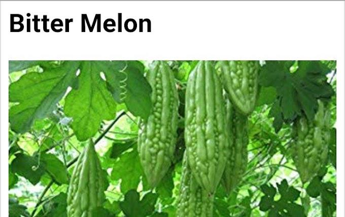 Botanical name of bitter melon and its medicinal uses