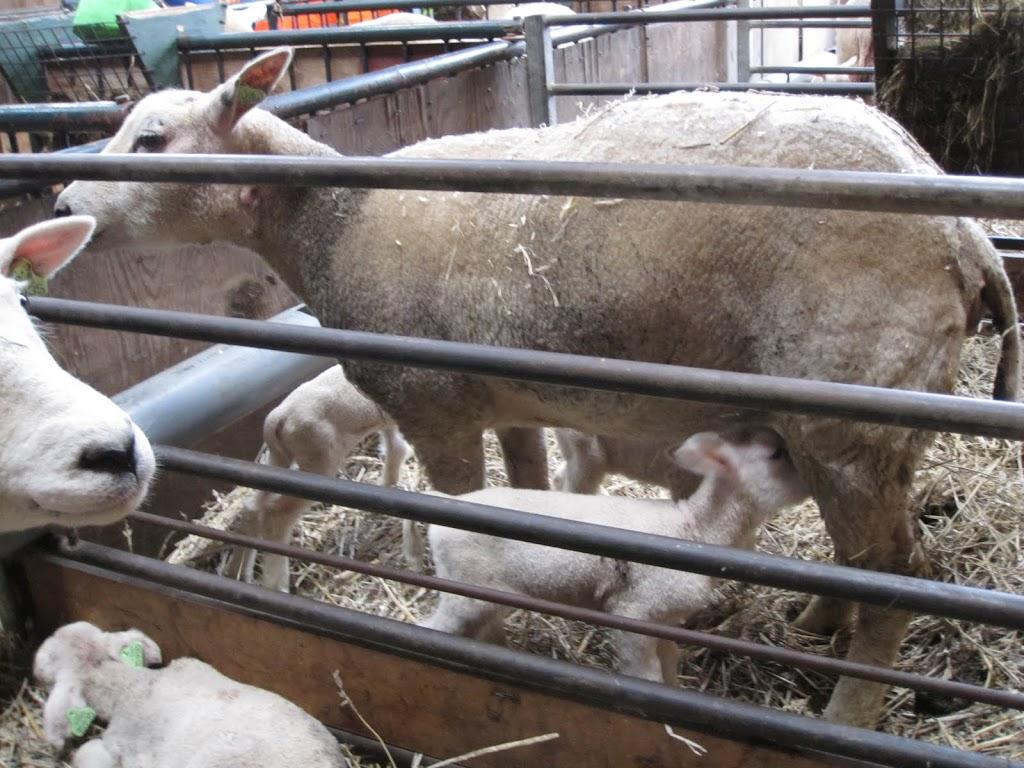 Welpen - Naar de boerderij - IMG_5490.JPG
