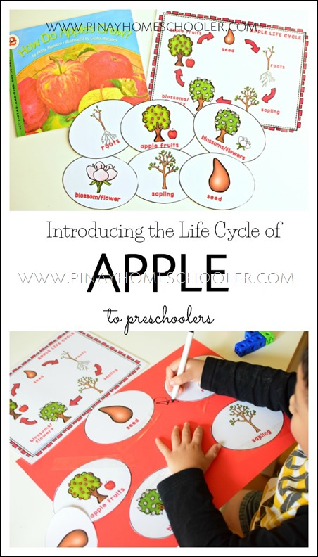 Life Cycle of Apples for Preschoolers
