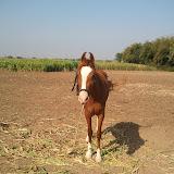 Maher-Farming-05.jpg