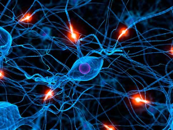 Cerebro humano conexiones