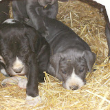 Star & True Blues February 21, 2008 Litter - HPIM1107.JPG