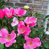 Gardening 2014 - 116_1512.JPG