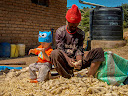 """Matimu helping a guy pull dried corn off the cob, eventually to be ground up and used to make """"pap"""", a type of corn porridge."""