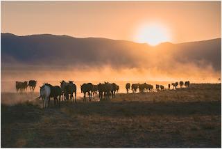 photo of Wild Mustangs in Utah
