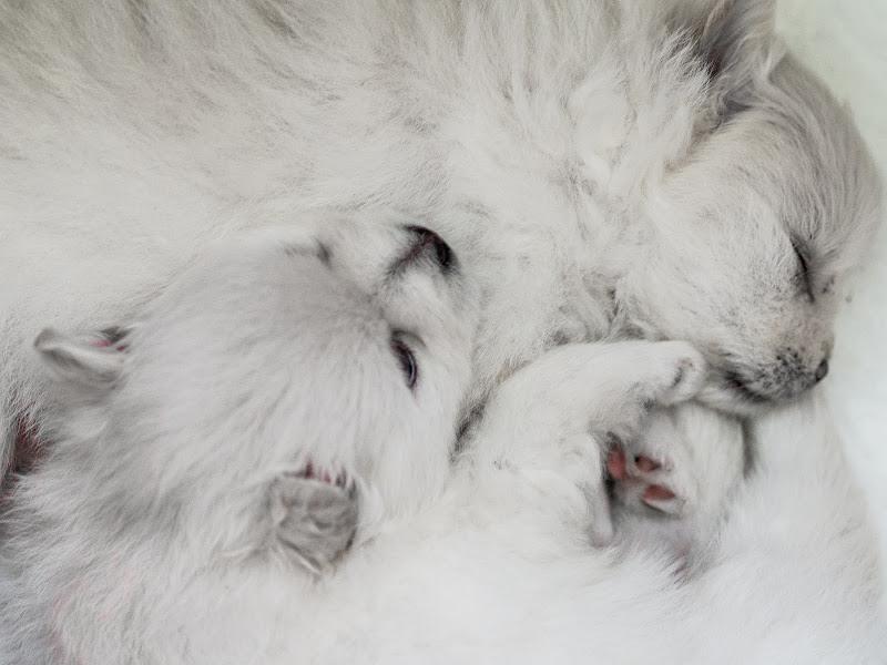 La cucciolata di anija